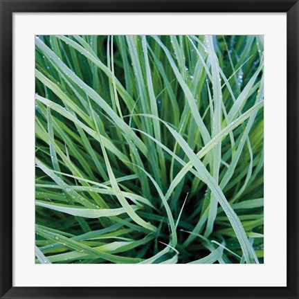 Framed Grass with Morning Dew Print