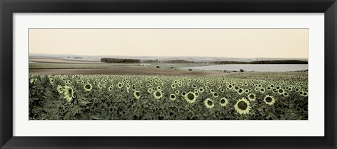 Framed Andalusian Sun Flowers Print
