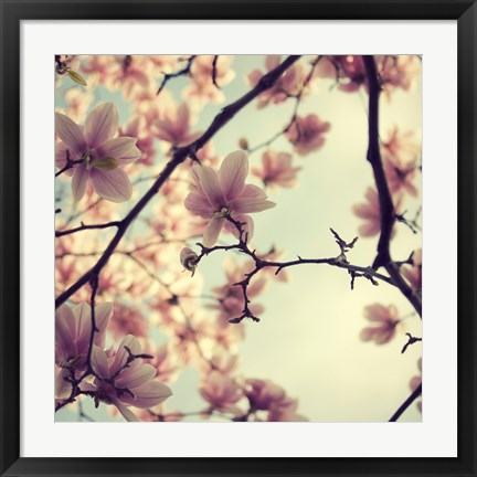 Framed Pink Blossoms Print