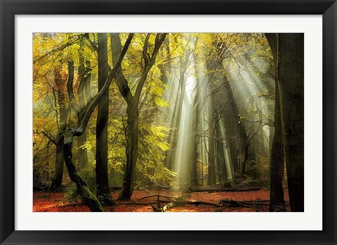 Framed Yellow Leaves Rays Print