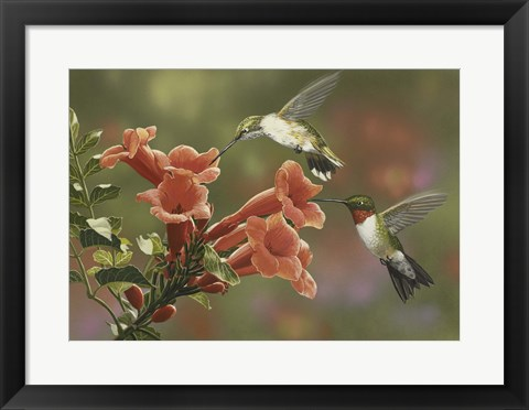 Framed Hummingbirds and Trumpet Flowers Print