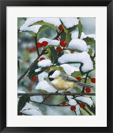 Framed Chickadees And Holly Branch Print