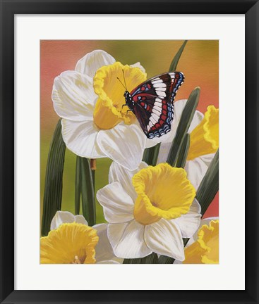 Framed Daffodils & Butterfly Print
