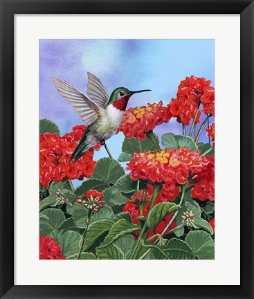 Framed Hummingbird And Flower 2 Print