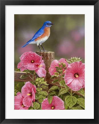 Framed Bluebird With Hibiscus Print