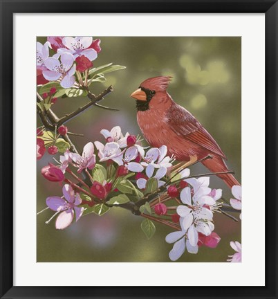 Framed Cardinal with Apple Blossoms Print