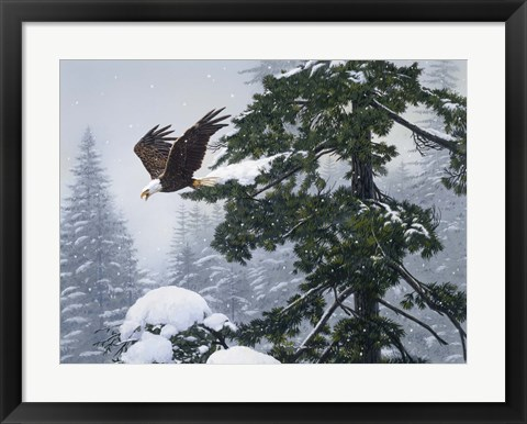 Framed Soaring Eagle / Winter Print