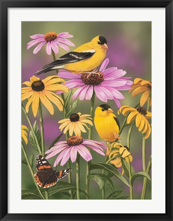 Framed Golden Finches Print