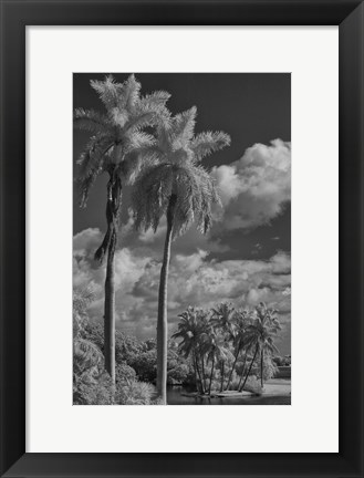Framed Eleven Palms Print