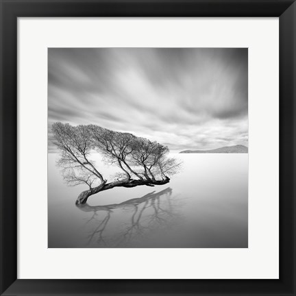 Framed Water Tree VII Print