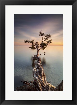 Framed Water Tree III Print