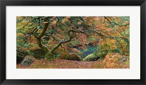 Framed Tree Final Print