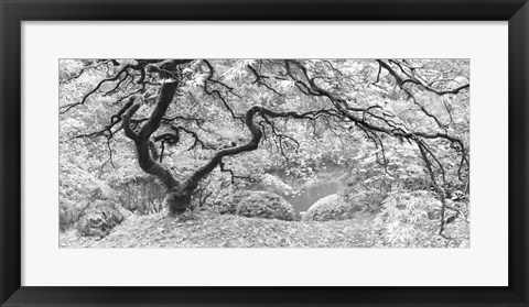 Framed Tree Final B&W Print