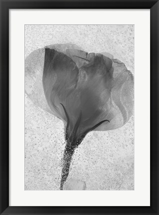 Framed Flowers on Ice BW-2 Print