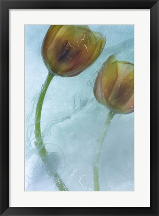 Framed Flowers on Ice-5 Print