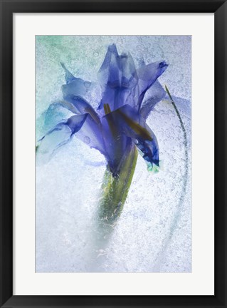 Framed Flowers on Ice-6 Print