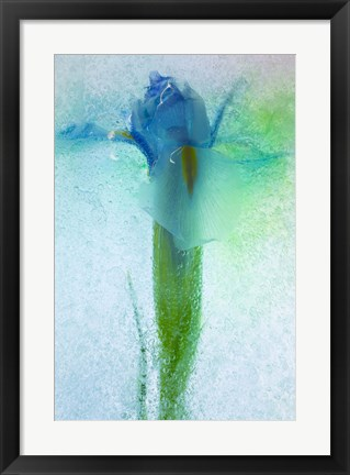 Framed Flowers on Ice-7 Print