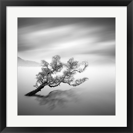 Framed Water Tree VI Print
