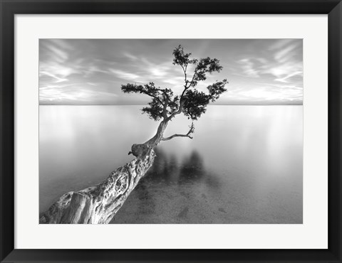 Framed Water Tree XIII Print