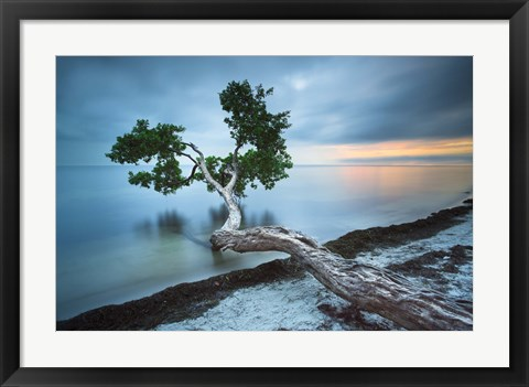 Framed Water Tree 10 Color Print