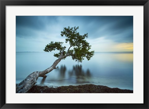 Framed Water Tree 11 Color Print
