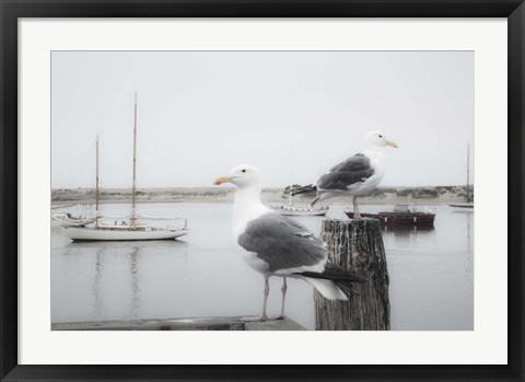 Framed Two Seagulls & Boats Print