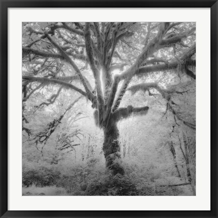 Framed Lightning Tree II Print