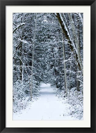 Framed Snow Covered Road Through a Forest, Washington State Print