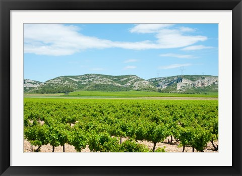 Framed Vineyards with hills in the background, Alpilles, Route d'Orgon, Eyguieres, Bouches-Du-Rhone, Provence-Alpes-Cote d'Azur, France Print