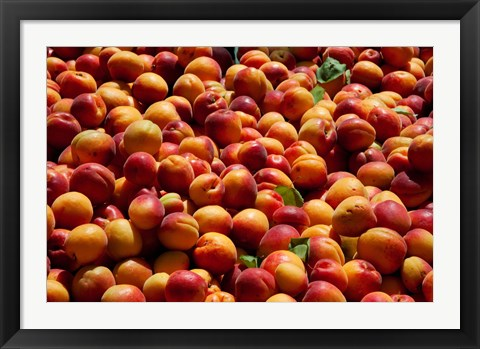Framed Nectarines for sale at weekly market, St.-Remy-de-Provence, Bouches-Du-Rhone, Provence-Alpes-Cote d'Azur, France Print
