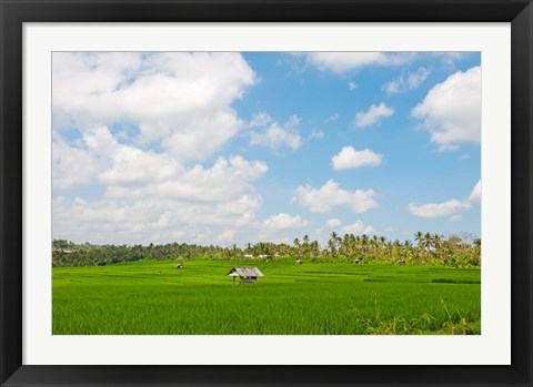 Framed Rice field, Rejasa, Penebel, Bali, Indonesia Print