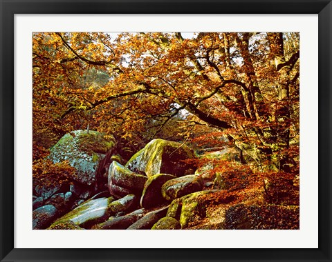 Framed Trees with Granite Rocks at Huelgoat forest in autumn, Finistere, Brittany, France Print