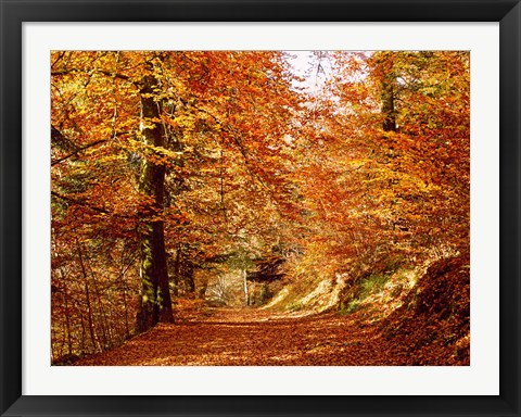 Framed Trees at Huelgoat forest in autumn, Finistere, Brittany, France Print