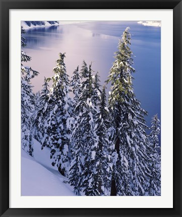Framed Snow Covered Trees at South Rim, Crater Lake National Park, Oregon Print