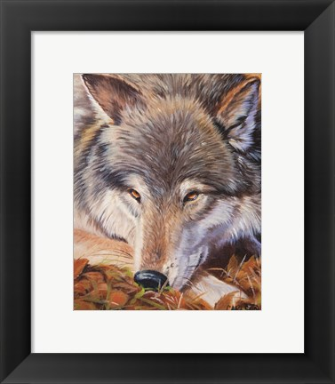 Framed Grey Wolf - up close Print