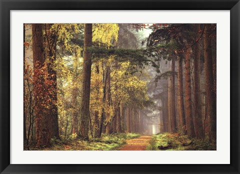 Framed Colors of the Forest Print