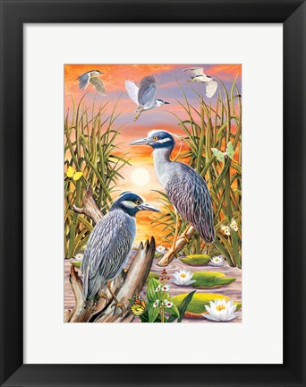 Framed Night Herons Print