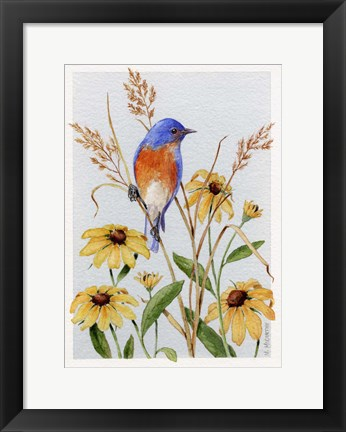 Framed Bluebird And Blackeyed Susans Print