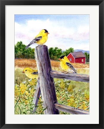 Framed Goldfinch Print