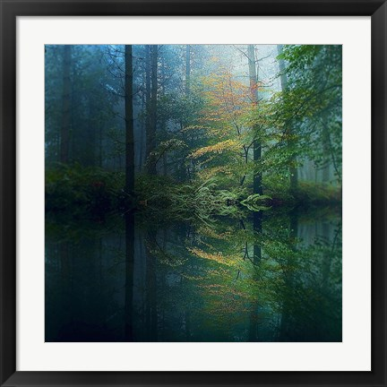 Framed Forest Print