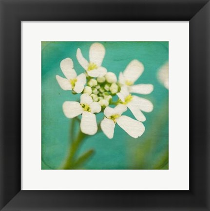 Framed White Flowers III Print