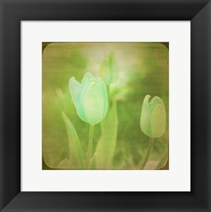 Framed White Flowers VIII Print