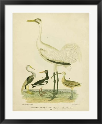 Framed Antique Crane & Heron Print