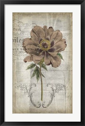Framed French Floral II Print
