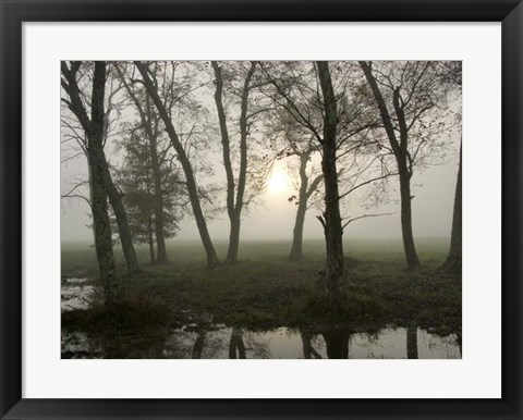 Framed Reflections of Nature Print