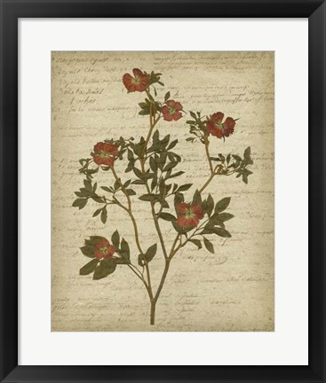 Framed Romantic Pressed Flowers I Print