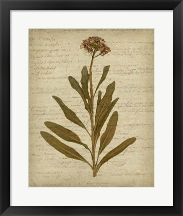 Framed Romantic Pressed Flowers II Print