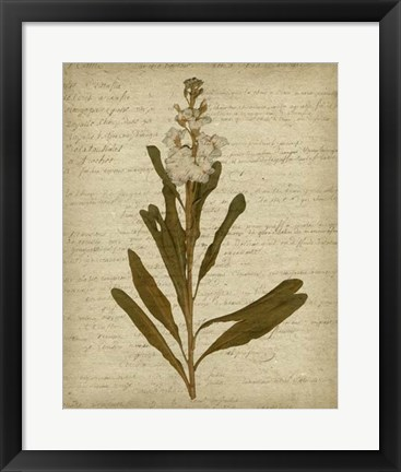 Framed Romantic Pressed Flowers III Print