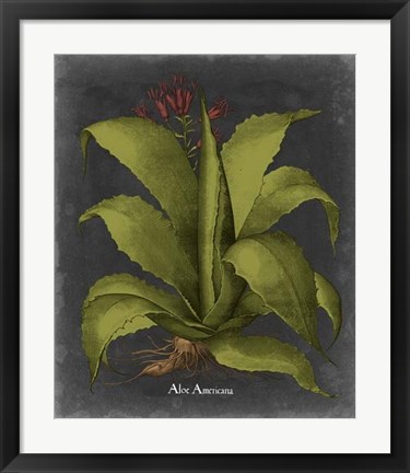 Framed Besler Dramatique III Print