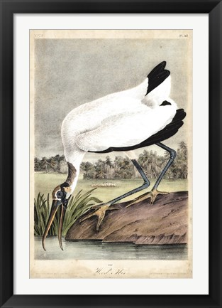 Framed Wood Ibis Print